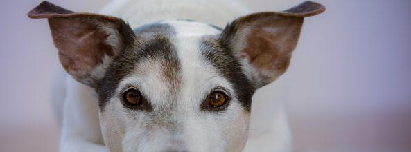 ¿Los perros recuerdan a las personas que más les han querido?