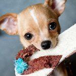 Las 5 mejores razas de perros para tener en pisos pequeños