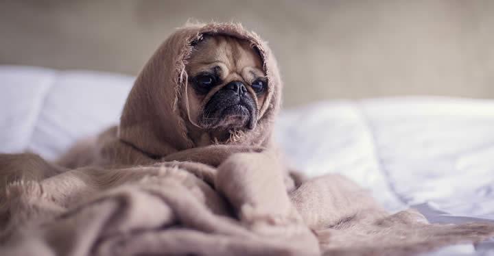 ¿Vives en un piso pequeño? Adopta el perro que mejor se adapte a tu hogar
