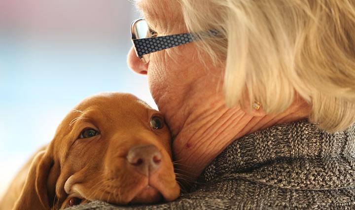 Curiosidades sobre perros - A los perros no les gustan los abrazos
