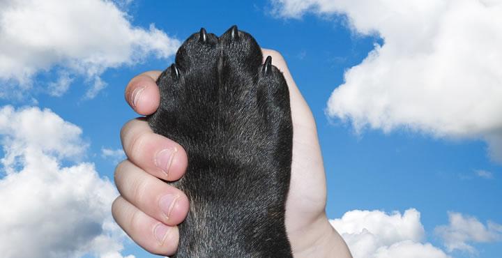 Los perros y el amor humano