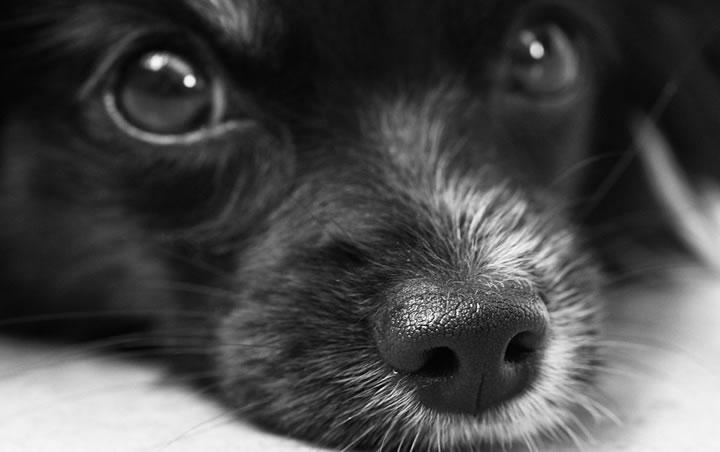 Curiosidades caninas, ¿cómo ven los perros?