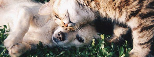 ¿Se llevan realmente mal los perros y los gatos? Descubre la verdad