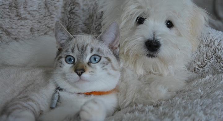 Cómo conseguir que perros y gatos se lleven bien