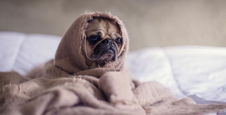 ¿Tienen los perros la capacidad de engañarnos?