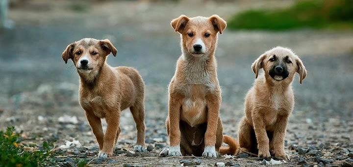 Cómo adoptar un perro callejero