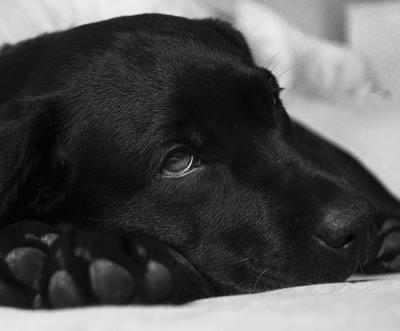 Salud y enfermedades de los perros