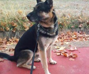 Razas de perros grandes: Tipos y características