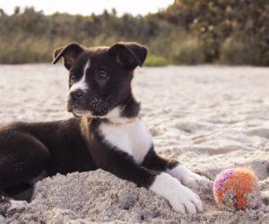 Equipa a tu perro para este verano