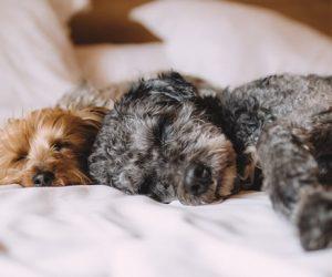 Soñar con nuestros animales puede decir mucho de nosotros