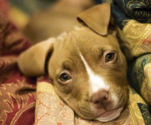 ¿Qué ventajas ofrece la alimentación natural para perros?